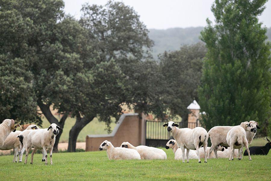 Queso Arribes Salamanca - Dehesa Hacienda Zorita
